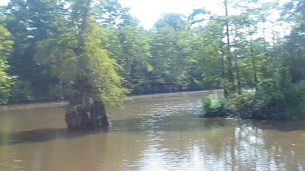 https://i2.wp.com/upload.wikimedia.org/wikipedia/commons/thumb/a/ae/Revised_photo_of_Dorcheat_Bayou_in_Webster_Parish%2C_LA_MVI_2548.jpg/600px-Revised_photo_of_Dorcheat_Bayou_in_Webster_Parish%2C_LA_MVI_2548.jpg