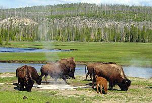 Photo taken in the Yellowstone area.