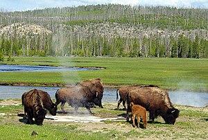 Photo taken in the Yellowstone area.