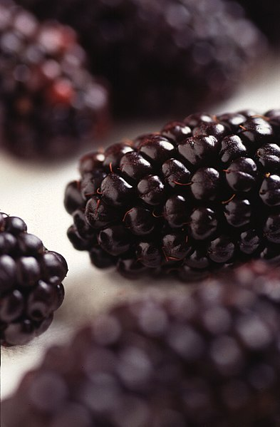 File:Black Butte blackberry.jpg