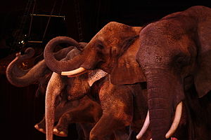 Elephant in a circus presentation.