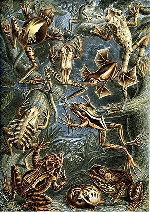 Colour plate from Ernst Haeckel's 1904 Kunstfo...