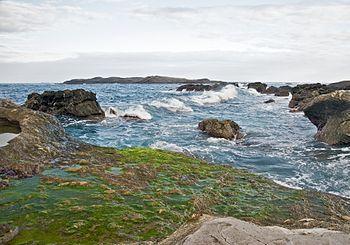 English: Green algae o rocks at ShihTiPing (gi...