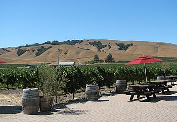 English: Vineyard at the Robledo Winery in Son...