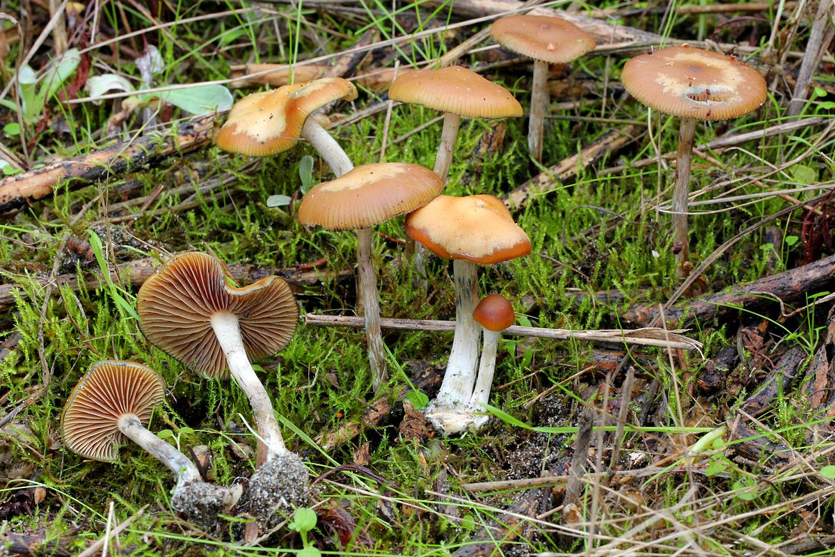 All Psychedelic Mushrooms