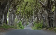 Fichier:Dark Hedges near Armoy, Co Antrim (cropped).jpg