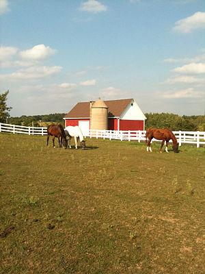 Horses Grazing outside of Hartford, WIsconsin
