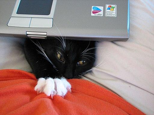 Cat & The Dell - Feb 2007