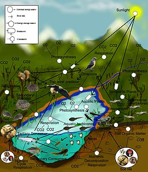 A freshwater aquatic and terrestrial food-web.