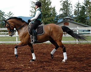 Canadian paralympic rider, Karen Brain, school...