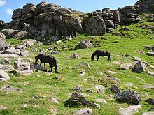 Dartmoor Cheval Wikipdia