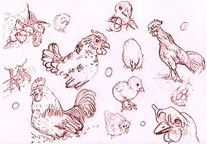 chickens sketches