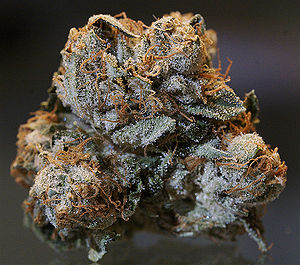 English: The dried bud of a Kush cannabis plan...