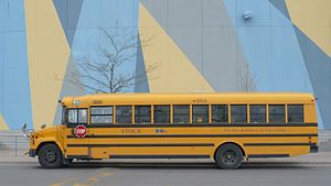 Stock Transportation school bus