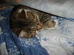 Français : Un chat en train de dormir English:...