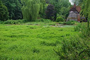 English: Watercress beds, Alresford
