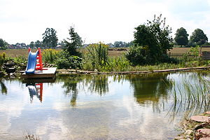 A typical swimming pond in Summer