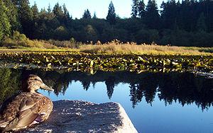Beaver Lake, Stanley Park, Vancouver, BC, Canada