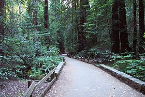 Muir Woods Paved Hiking Trail