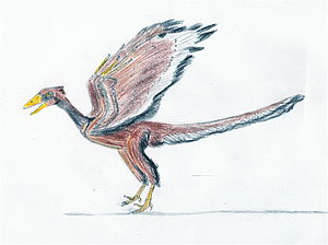 Archaeopteryx litographica from the Late Juras...