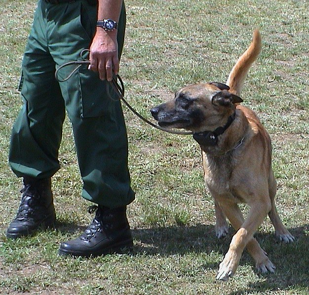 Diensthund mit Telereizgerät © wikipedia.org