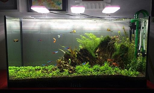 freshwater led aquarium lighting