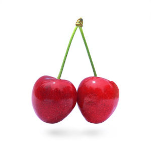 A pair of cherries from the same stalk. Prunus...
