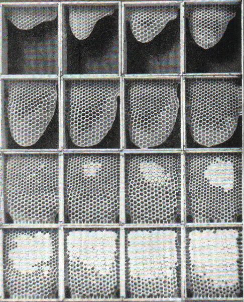 File:Honeycomb-Process.png