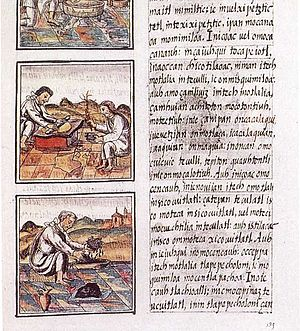 Page 51 of Book IX from the Florentine Codex. ...