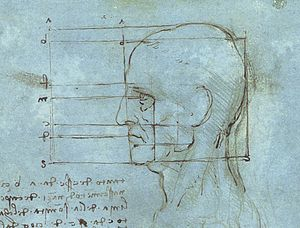 The human head drawn by Leonardo da Vinci