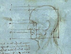 The human head drawn by Leonardo da Vinci
