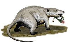 Bazen yavru dinozorları avlayan bir Repenomamus