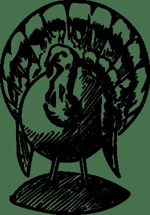 A Turkey.