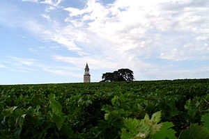 Bégédan vineyards in the Haut-Medoc of Bordeaux.