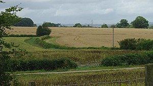 Corn Field, Vuggles Farm, Barcombe, East Susse...