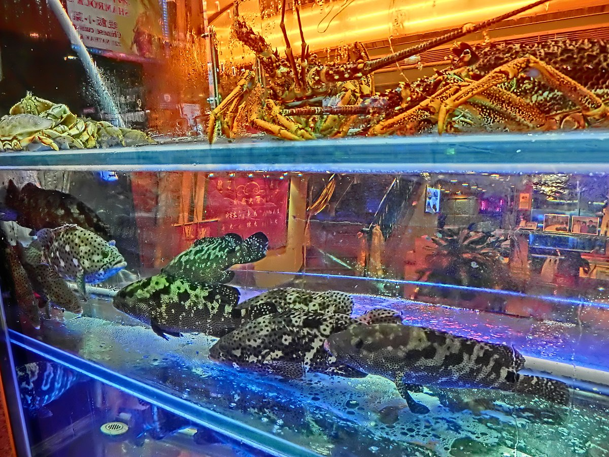 Fresh Seafood Boston Ma