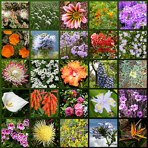 Various flower species from Madeira