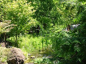 English: ADD PLANT DESIGNATION HERE Botanical ...