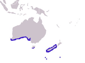 Distribution of the New Zealand Fur Seal, Arct...