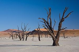Dead acacia trees in Dead Vlei, Namibia