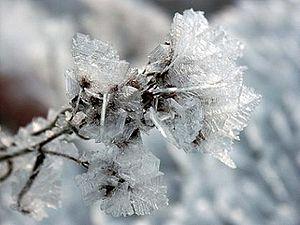 Ice Iris