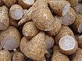 Colocasia esculenta dsc07801.jpg