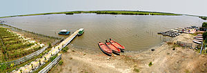 An overview of the Pichavaram mangrove forest ...
