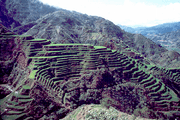 Banaue Rice Terraces, Ifugao Province, Philippines.