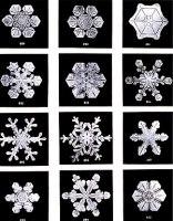Snow flakes by Wilson Bentley. Bentley was a b...