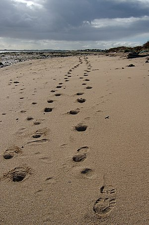 English: Footprints from Westhaven. Looking ba...