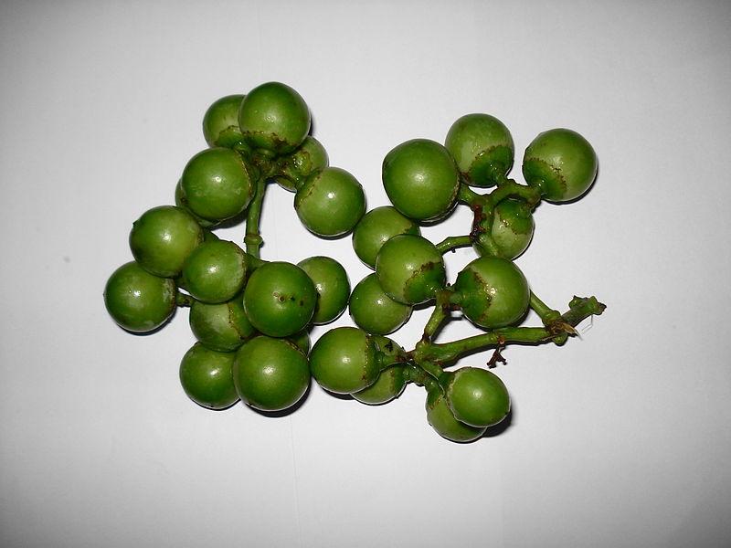 File:Lasoora (Green).JPG