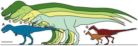 File:Nanuqsaurus size.tif