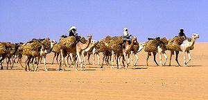 A camel train traveling from Agadez to Bilma (...