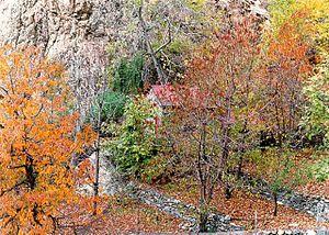 North of Iran, Shomal.